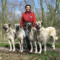 Kangal Dog Training