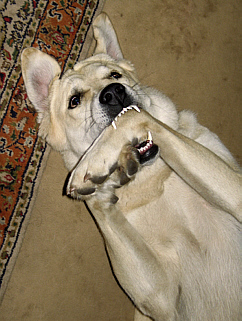 buch hundeerziehung empfehlung